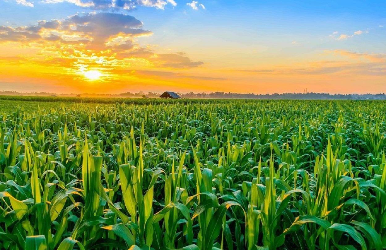 Agricultura-MONTANA-1-1024x640